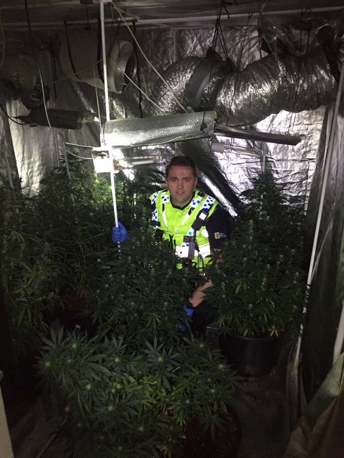 Police uncovering the cannabis farm
