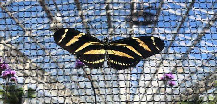 Butterflies and burgers take centre stage at Bents